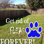 How to Get Rid of Fleas Naturally Forever
