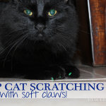 Soft Claws {Stop the Scratching!}